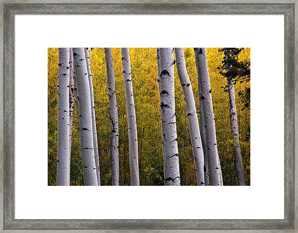 Aspen Light 2 Framed Print