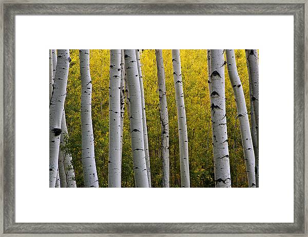 Aspen Light 3 Framed Print