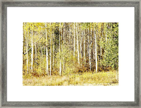Aspen Sunshine Framed Print