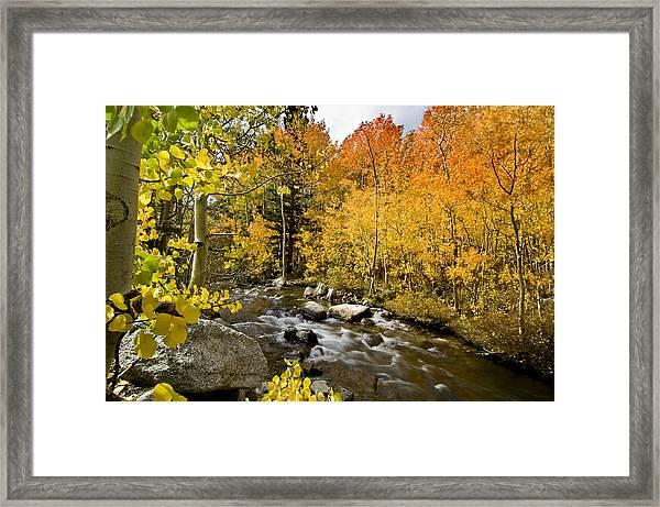 Aspens At Bishop Creek Framed Print