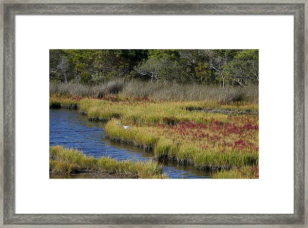 Asseteague Island Marsh Framed Print