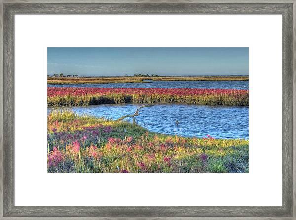 Asseteague Island Salt Marsh Framed Print