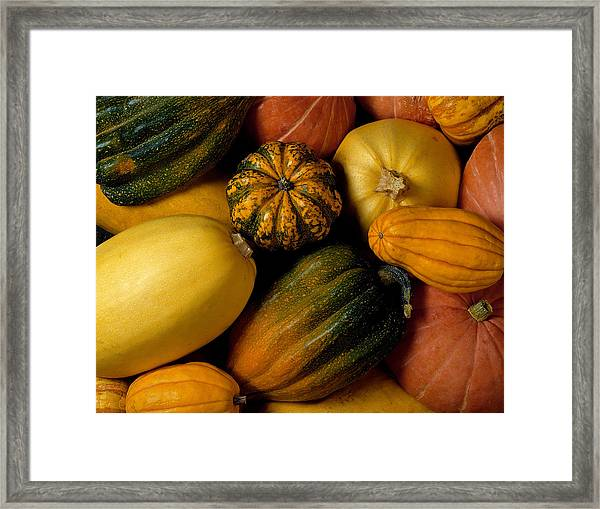 Assortment Of Squash Framed Print by Brand X Pictures