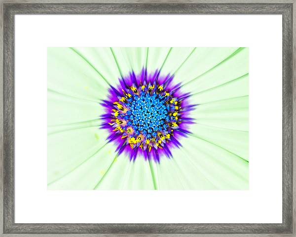 Aster Number Two Framed Print