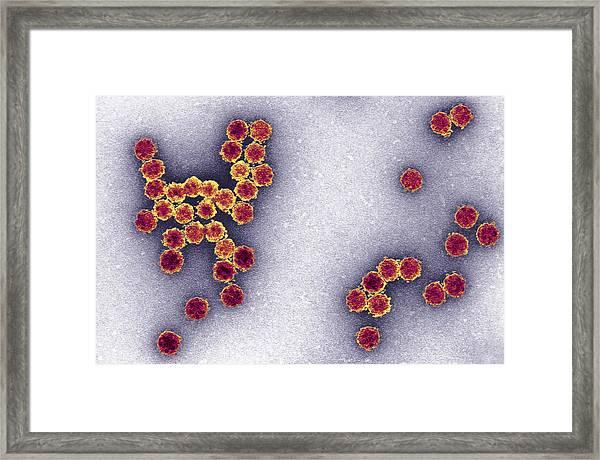 Astrovirus Infections Cause Gastroenteritis In Humans. Tem X50,000 Framed Print by Dr. Hans Gelderblom