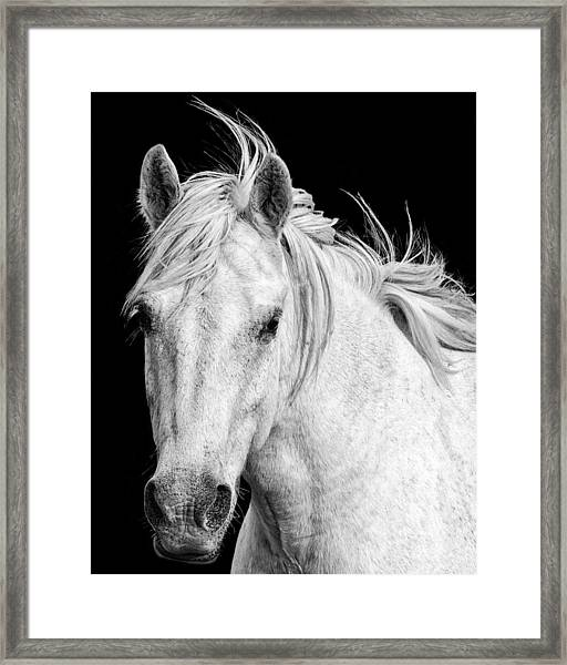 Framed Print featuring the photograph At Carmargue by Gigi Ebert