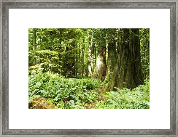 At Cathedral Grove Framed Print