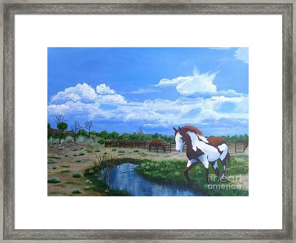 At The Ranch Framed Print
