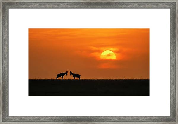 At The Sunset Framed Print by Jun Zuo