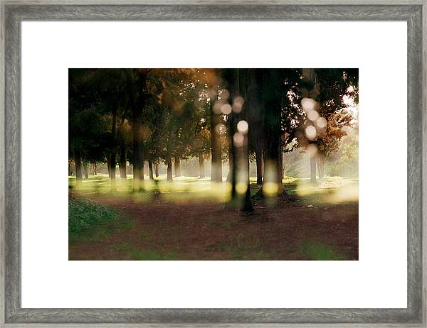 At The Yarkon Park Tel Aviv Framed Print