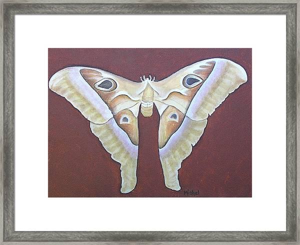 Atlas Moth Framed Print
