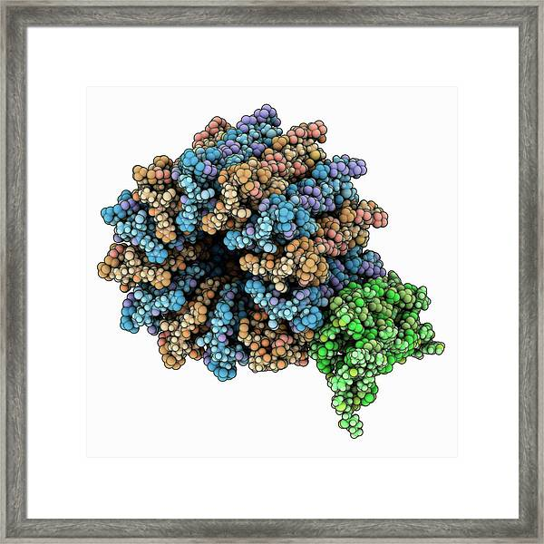Atp Synthase Subcomplex Framed Print by Laguna Design/science Photo Library