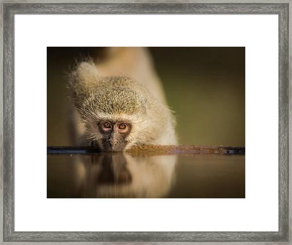 Attentive Framed Print