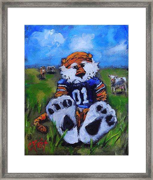 Aubie With The Cows Framed Print