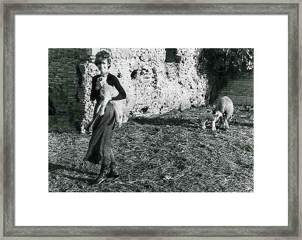 Audrey Hepburn On A Farm Framed Print