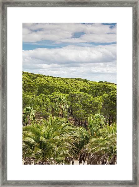 Australia, Barossa Valley Framed Print