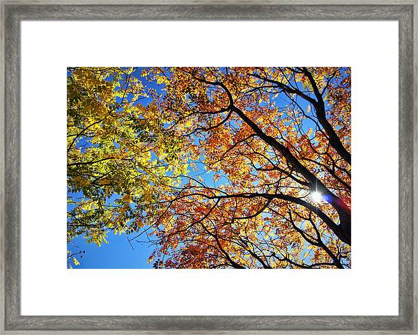 Autumn Afternoon Framed Print