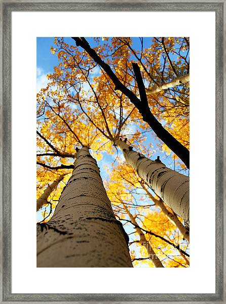Framed Print featuring the photograph Autumn Aspens by Kate Avery