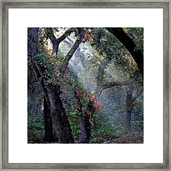 Autumn At First Light Framed Print