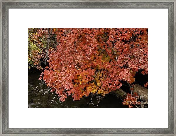 Autumn At Suttle Lake Framed Print