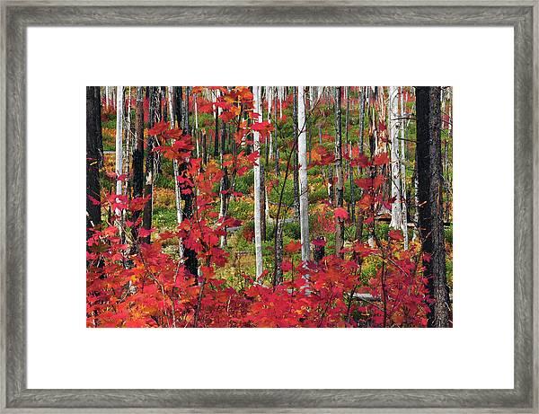Autumn At The Santiam Pass, Oregon, Usa Framed Print