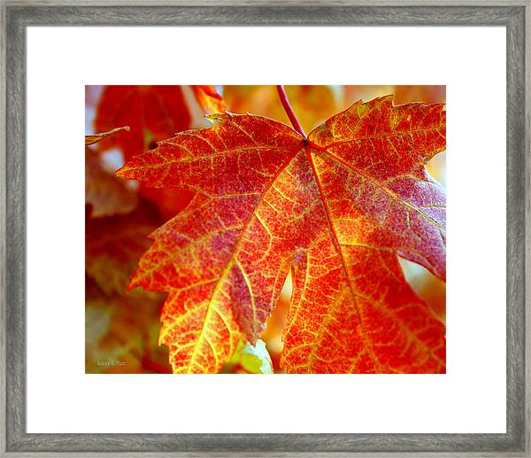 Autumn Blaze Framed Print