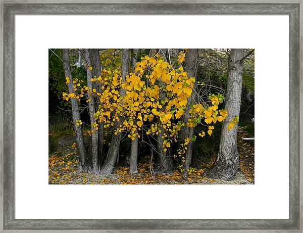 Autumn Breakout Framed Print
