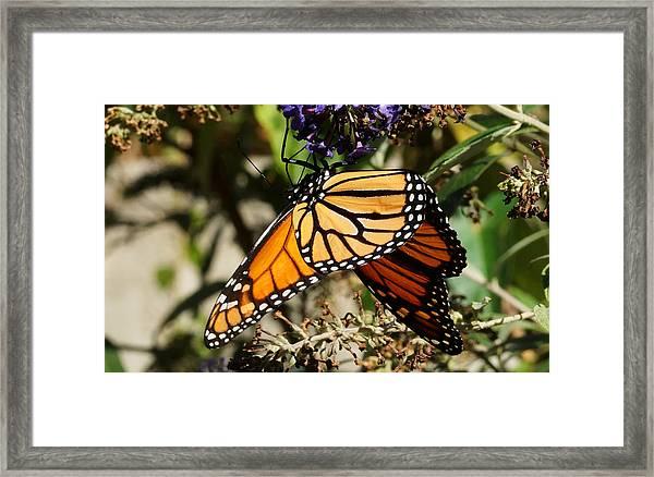 Autumn Butterfly Framed Print