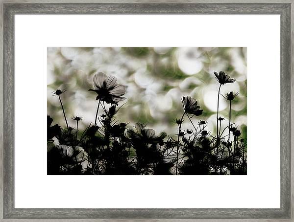 Autumn Chorus Framed Print by Keisuke Ikeda @