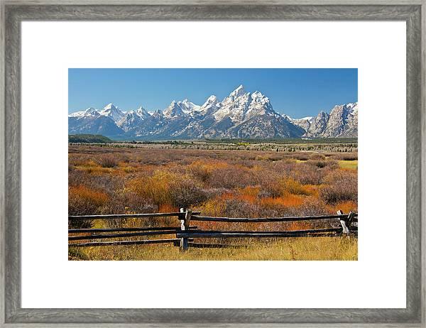 Autumn Color, Grand Tetons, Buck Framed Print