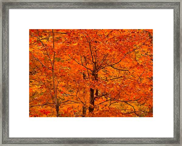 Autumn Color Splash Framed Print
