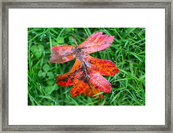 Autumn Colours. Framed Print