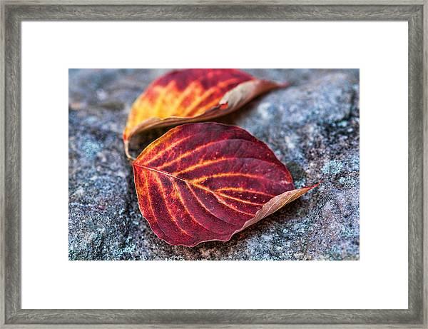 Autumn Family Tree Framed Print
