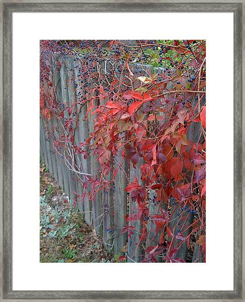 Framed Print featuring the photograph Autumn Fence by Barbara Von Pagel