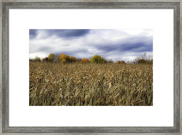 Autumn Field Framed Print