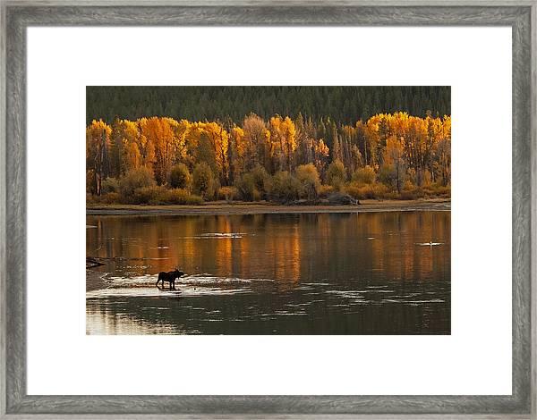 Autumn Fire Framed Print by Sandy Sisti