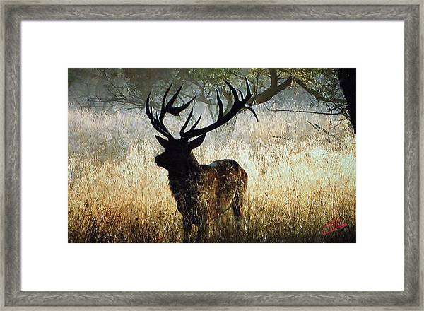 Framed Print featuring the photograph Autumn Forest Walk In Denmark  by Colette V Hera  Guggenheim