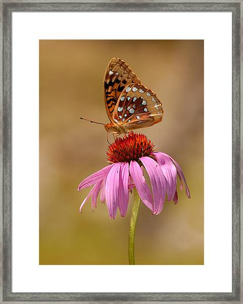 Autumn Fritillary Butterfly Framed Print
