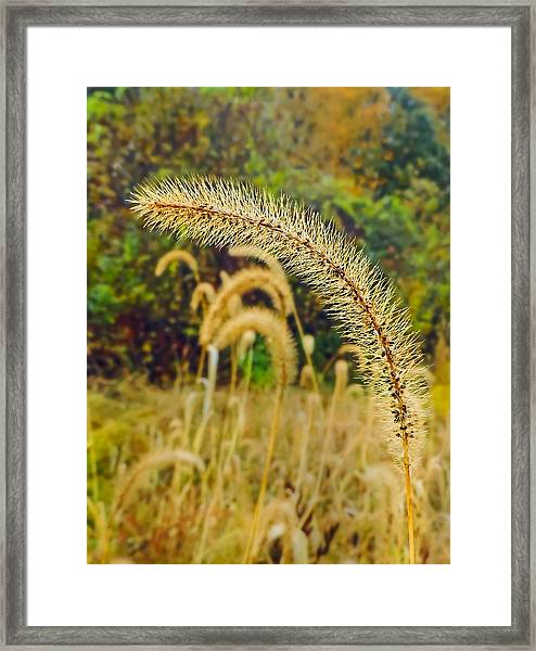 Autumn Grass Framed Print