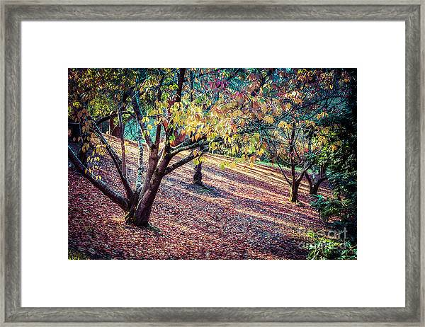 Autumn Grove Framed Print