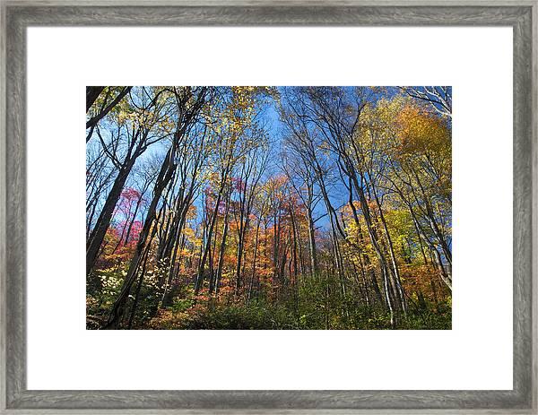 Autumn IIi Framed Print