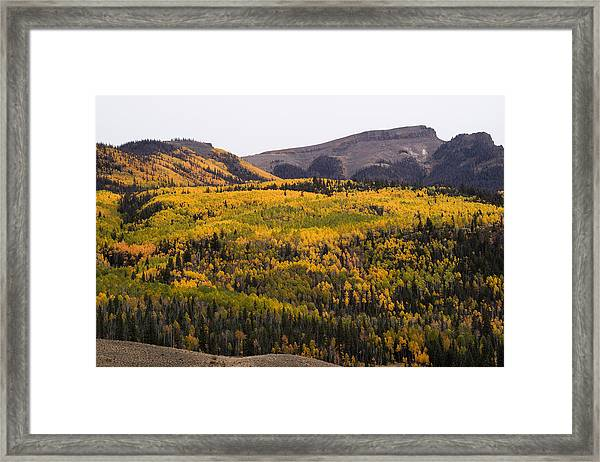 Autumn In The Colorado Mountains Framed Print by Greg Ochocki