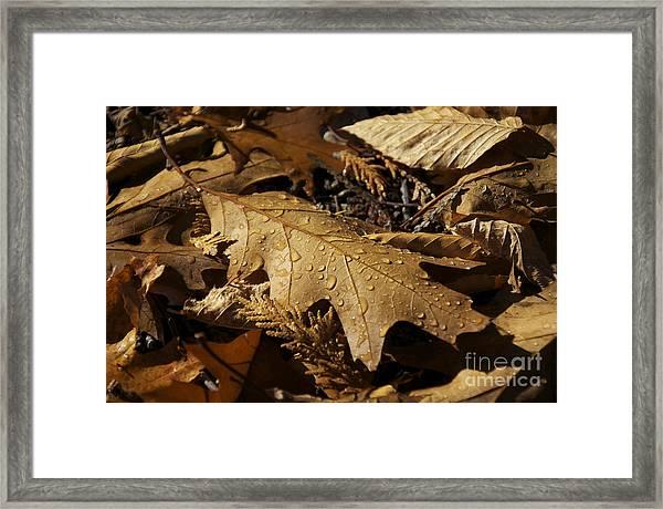 Autumn Leaf At Dawn Framed Print