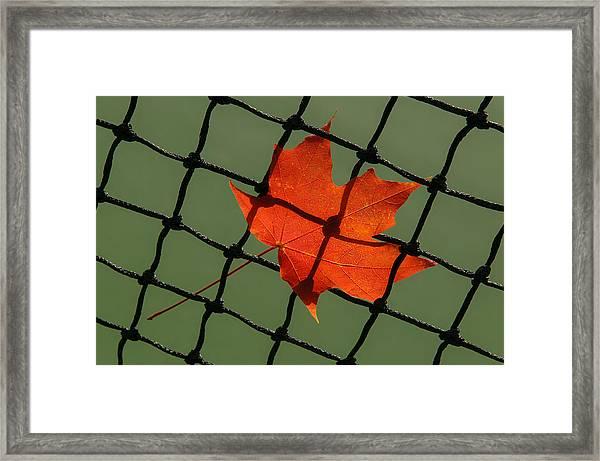 Autumn Leaf In Net Framed Print