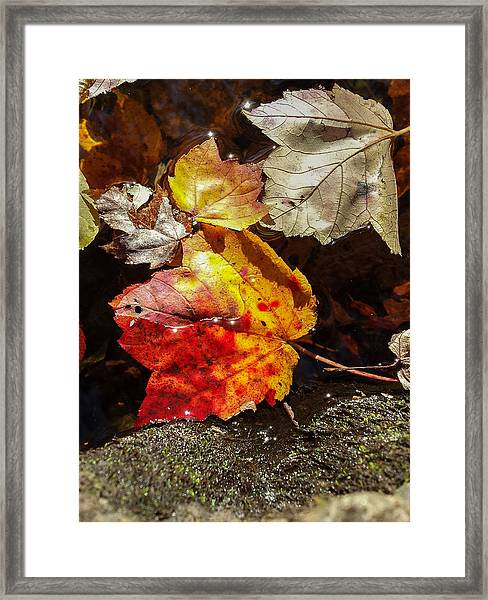Autumn Leaves On Water Framed Print