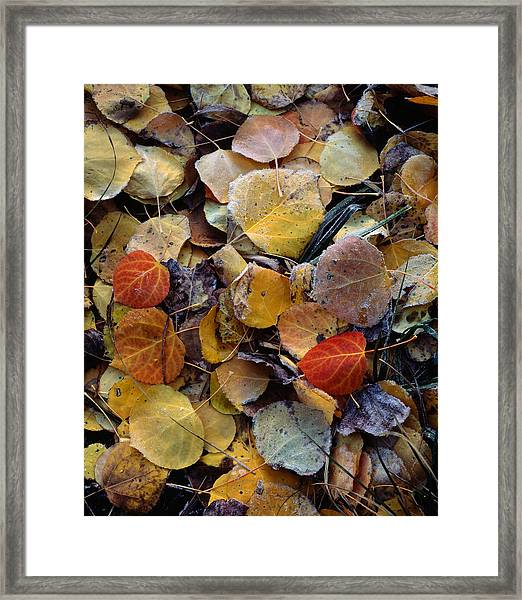 Autumn Leaf Puzzle Framed Print