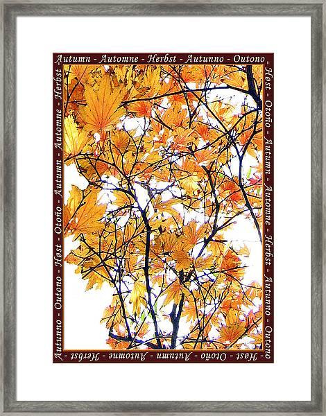 Autumn Leaves 4 Framed Print