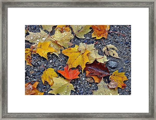 Autumn Leaves In Rain Framed Print