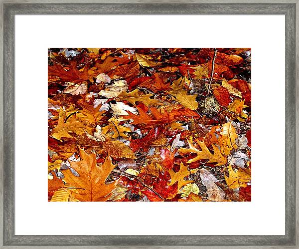Autumn Leaves On The Ground In New Hampshire - Bright Colors Framed Print