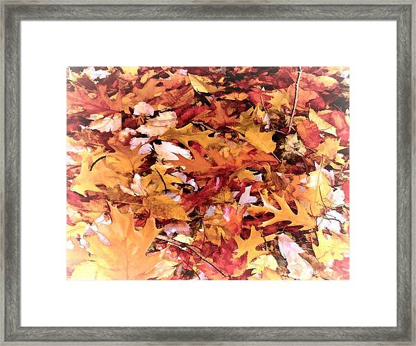 Autumn Leaves On The Ground In New Hampshire In Muted Colors Framed Print
